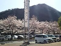 H30sakura